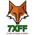 lgo_7XFF_transparent_200-1