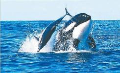 kit_i_delfin